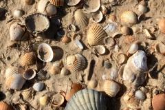 Pláž na ostrově Ilha Deserta místy ukrývá opravdové poklady